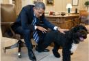 L'ancien Président américain, Barack Obama pleure son chien